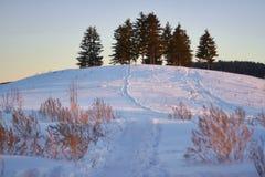 在晴朗的森林冬天雪的日落 在圣诞节前的早晨 童话森林在阳光下 免版税图库摄影