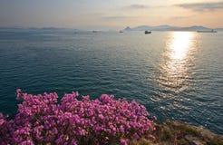 在晴朗的海滨的开花的杜鹃花 图库摄影