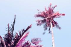 在晴朗的蓝天背景的蓬松棕榈树冠 减速火箭的蓝色桃红色被定调子的照片 库存图片