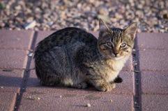 在晴朗的边路的小猫 免版税库存图片