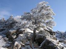 在智异山山顶部的树在冬天在韩国 库存图片
