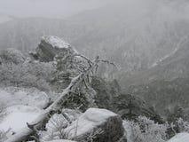 在智异山山顶部的树在冬天在韩国 免版税库存图片