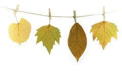 在晾衣绳的秋叶 免版税库存照片