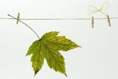 在晾衣绳的秋天叶子 免版税库存照片