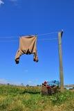 在晾衣绳,新西兰的布朗衬衣 免版税库存照片