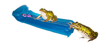 在暑假的二只青蛙 库存图片