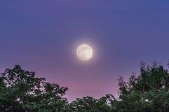 在暮色天空的满月 免版税库存照片