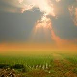在暮色日落的稻田 免版税图库摄影