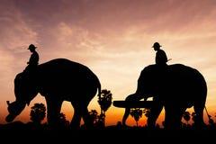 在暮色时间的大象工作 免版税库存照片