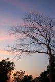 在暮色背景的分支树 免版税图库摄影