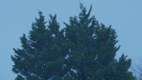 在暴风的树在晚上 股票视频