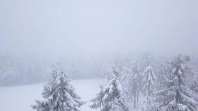在暴风雪在一个多雪的山具球果森林里,难受的不友好的冬天天气的飞行 股票视频