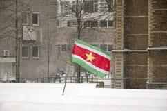 在暴风雪的热带旗子 库存照片