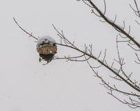 在暴风雪的黄蜂巢 免版税图库摄影
