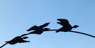 在曲拱的三只黑鸭 免版税库存照片