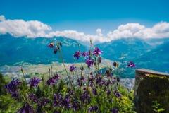 在更加坚硬的Kulm的美丽的紫色花 免版税图库摄影