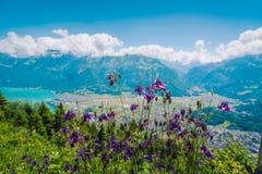 在更加坚硬的Kulm的美丽的紫色花 库存图片