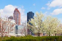 在曼哈顿的看法在罗斯福海岛上的樱花期间在纽约 库存图片
