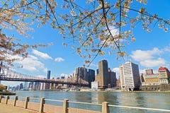 在曼哈顿,纽约摩天大楼的樱花和河视图  免版税图库摄影