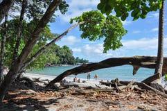 在曼纽尔安东尼奥国家公园,哥斯达黎加的海滩 免版税库存照片