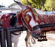 驴在最美丽的'白色'村庄的米哈斯一乘出租车 免版税库存照片