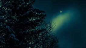 在月亮天空的背景的斯诺伊杉木 免版税库存照片