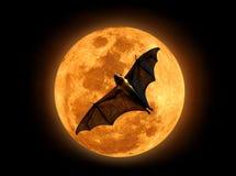 在月亮的果蝠 库存照片