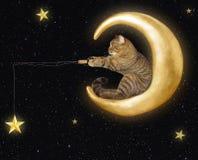 在月亮的猫捉住星 免版税库存照片