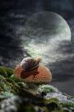 在月光的反射 库存图片