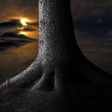 在月光的大树 免版税库存照片