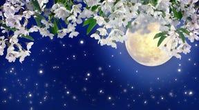 在月光的开花的樱桃 春天夜 神秘主义者 充分的moo 图库摄影