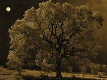 在月光的树 库存照片