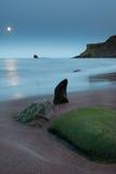 在月光的海形状的岩石 库存图片