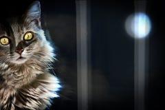 在月光的猫 免版税库存图片