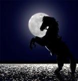 在月光的马 免版税库存照片