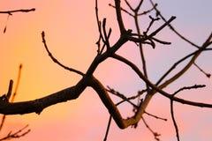 在有吸引力的颜色的分支在12月 免版税库存照片