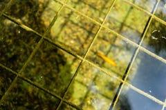 在有在公园看的水反射的池塘钓鱼 免版税图库摄影