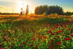 在有很多的油抽的机器花草原 库存照片