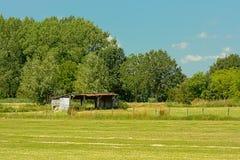 在有树的一个草甸流洒在Kalkense Meersen自然保护,富兰德,比利时的清楚的蓝天下 库存照片