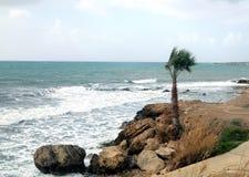 在有波浪的风雨如磐的海打破关于空的狂放的海滩反对在阴云密布的多云天空的石海岸infront的单独棕榈树 库存照片