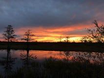 在有波纹的沼泽使日落陷入沼泽在水中 免版税库存图片