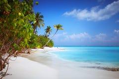 在有白色含沙田园诗完善的海滩和海和曲线棕榈的马尔代夫海岛Fulhadhoo靠岸 免版税库存照片