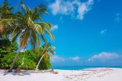 在有白色含沙田园诗完善的海滩和海和曲线棕榈的马尔代夫海岛Fulhadhoo靠岸 库存图片