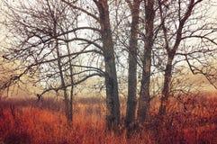 在有薄雾的天气-秋天风景的秋天森林有雾的树 库存图片