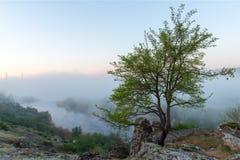 在有薄雾的峡谷、河和石头的绿色树 免版税库存照片