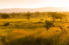 在有薄雾的早晨光的非洲大草原 免版税图库摄影