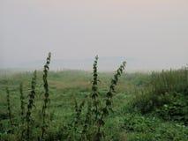 在有薄雾的早晨沼泽的一个荨麻 雾,阴沉和忧郁的大气的一块沼泽地 免版税图库摄影