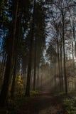 在有薄雾的森林和光的道路内 库存照片