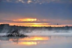 在有薄雾的池塘的日出 免版税库存照片