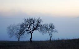 在有薄雾的秋天日的结构树 免版税库存照片